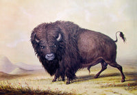 Buffalo Bull painted by George Catlin