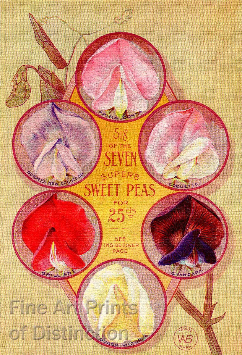 Burpee's Seven Superb Sweet Peas