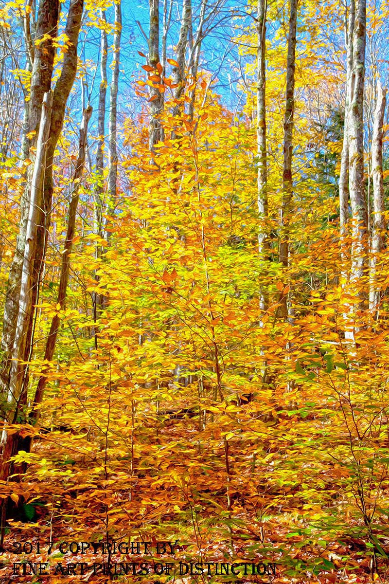 Vivid Yellow Hickory Trees and Oaks in the Fall Art Print