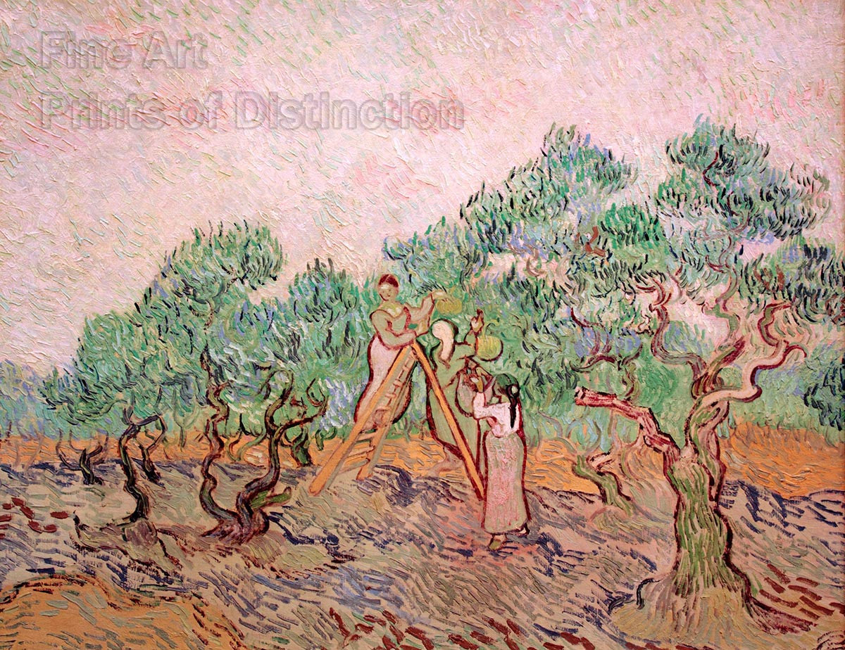 Women Picking Olives by Vincent Van Gogh