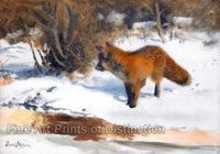 Fox in Winter Landscape by Swedish Wildlife artist Bruno Liljefors