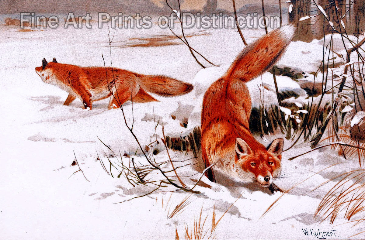 Two Red Foxes Hunting in the Snow by W. Kuhnert