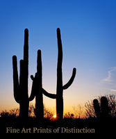 Tall Saguaro Cactus at Sunset