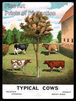 Typical Cows and Large Barn