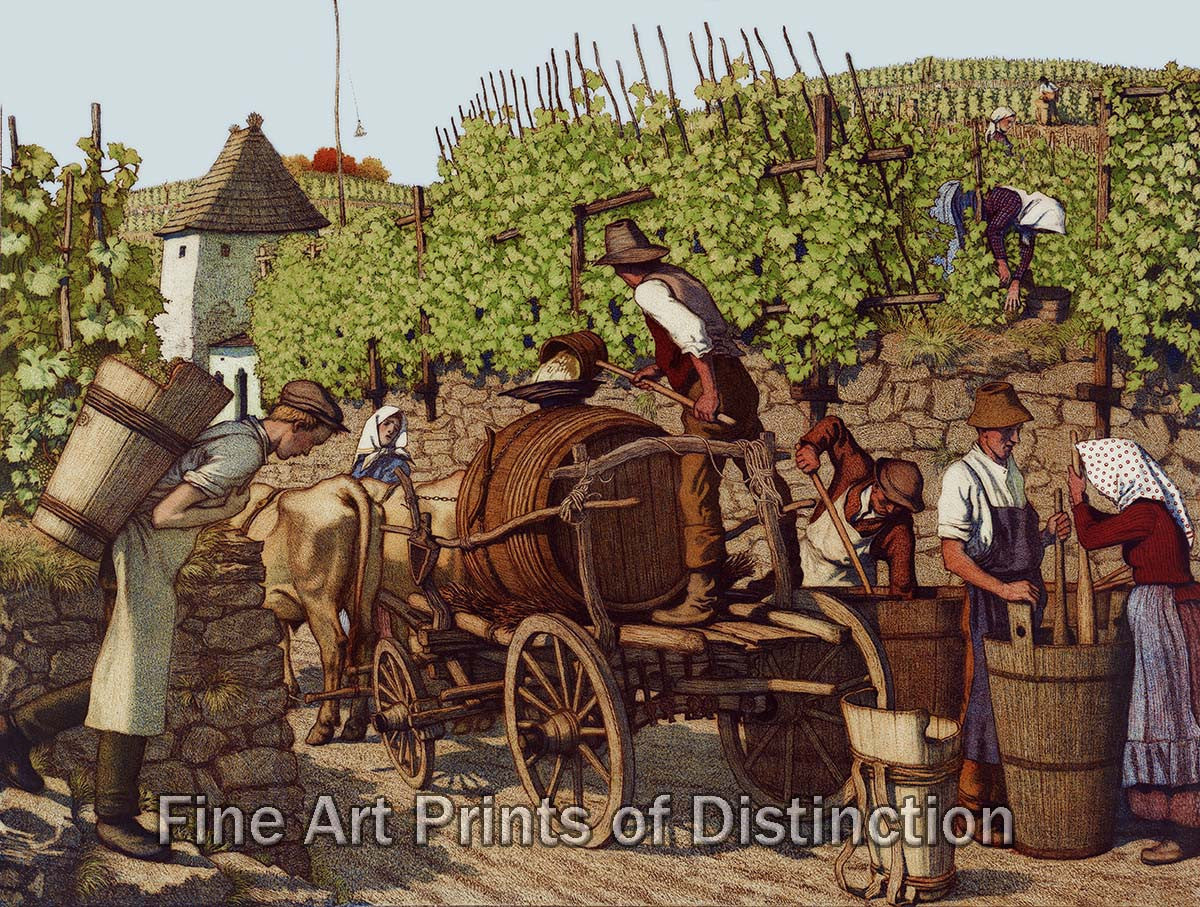 Grape Harvest and Wine Making