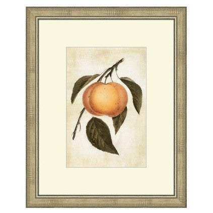 LOVELY FRUIT III - GDH | The decorators department Store