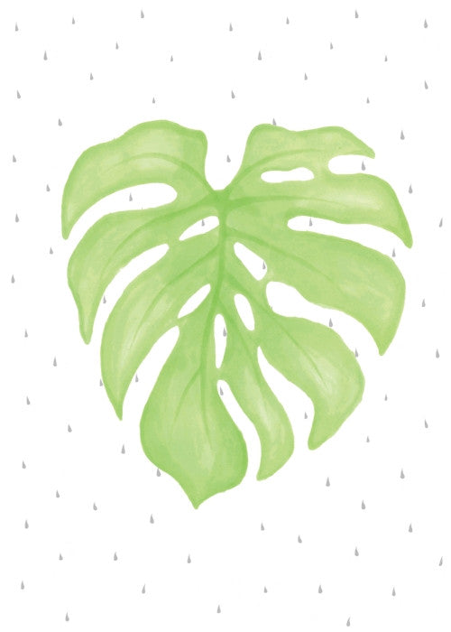 born-lucky-botanicals-cheeseplant-a3-print