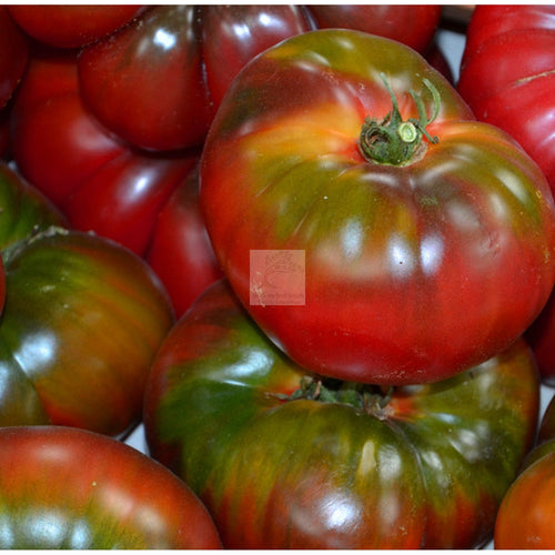 Black Krim Tomato Seed Organic-Tomato Seed-Heirloom Seed Supply