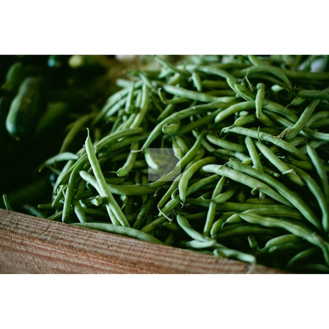 Blue Lake 274 Bush Green Bean Seed-Beans-Heirloom Seed Supply