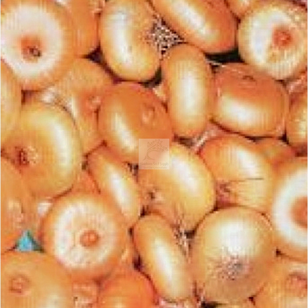 Borrettana Cipollini Onion Seed-Onion Seed-Heirloom Seed Supply