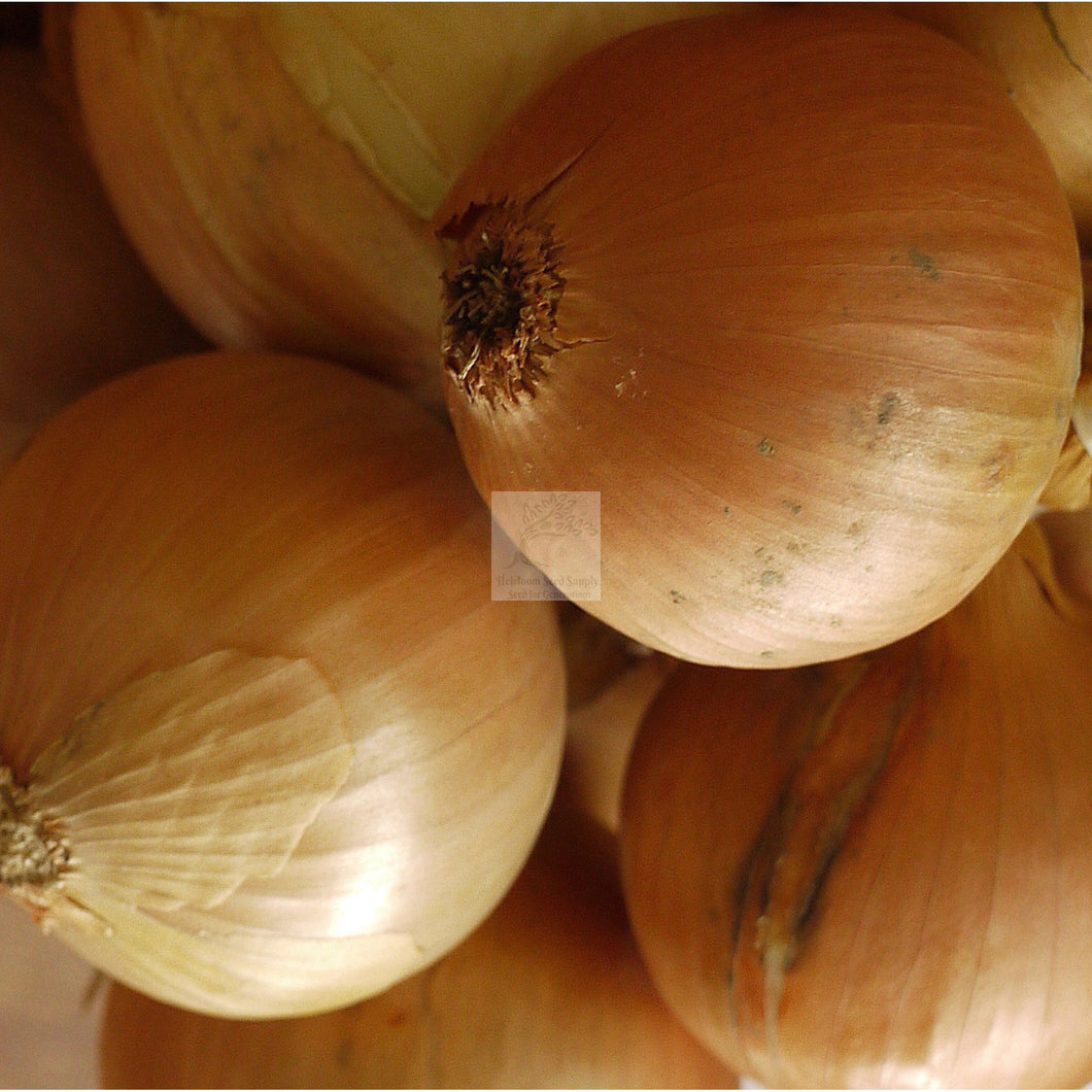 Clear Dawn Onion Seed Organic Biodynamic-Onion Seed-Heirloom Seed Supply