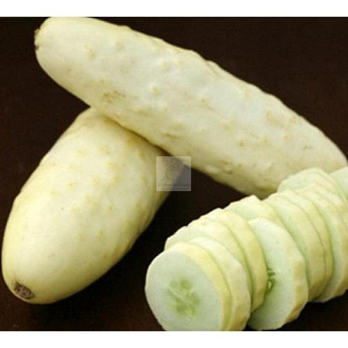 Silver Slicer Cucumber Seed Organic O.P.-Cucumber-Heirloom Seed Supply
