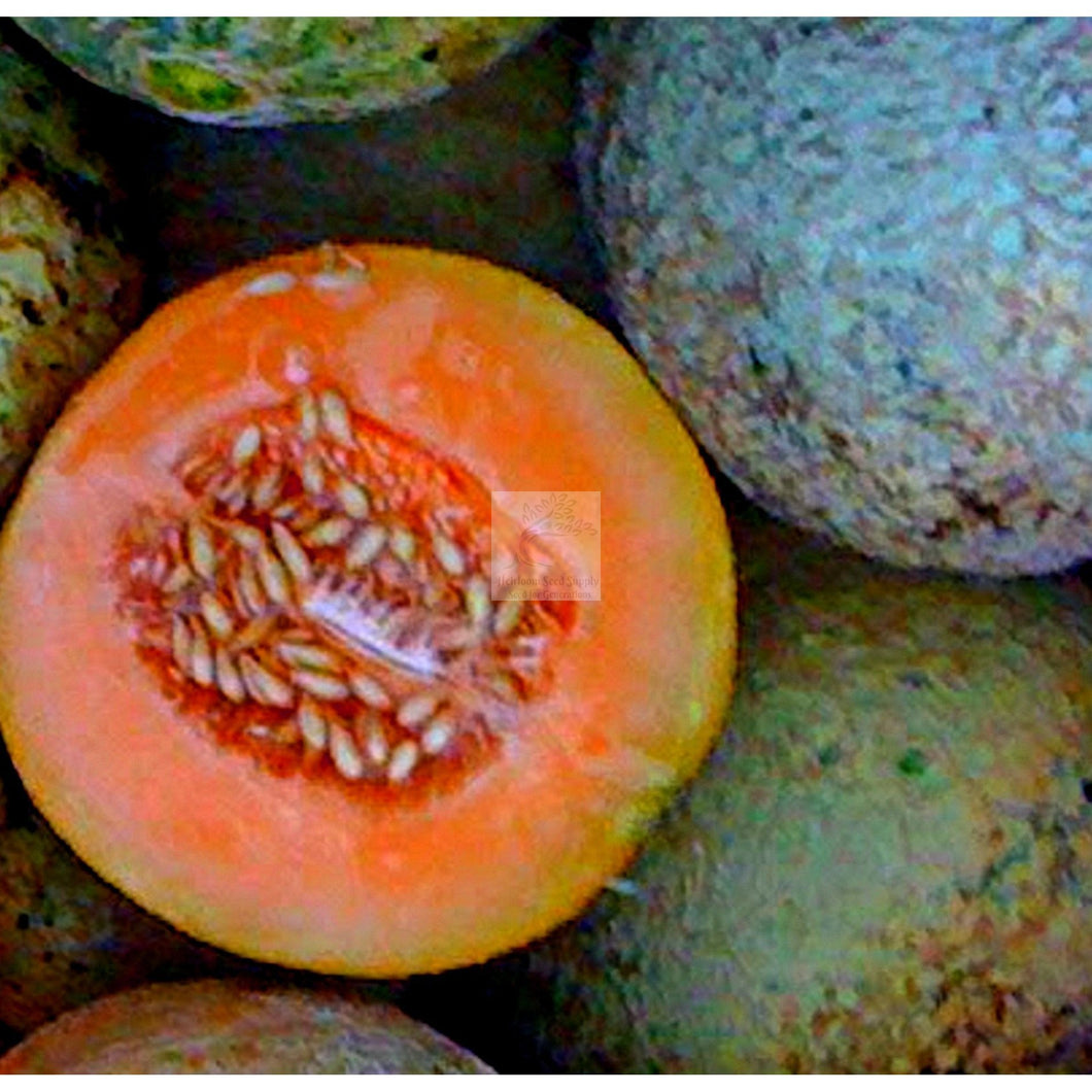Delicious 51 Muskmelon Seed-Muskmelon Seed-Heirloom Seed Supply