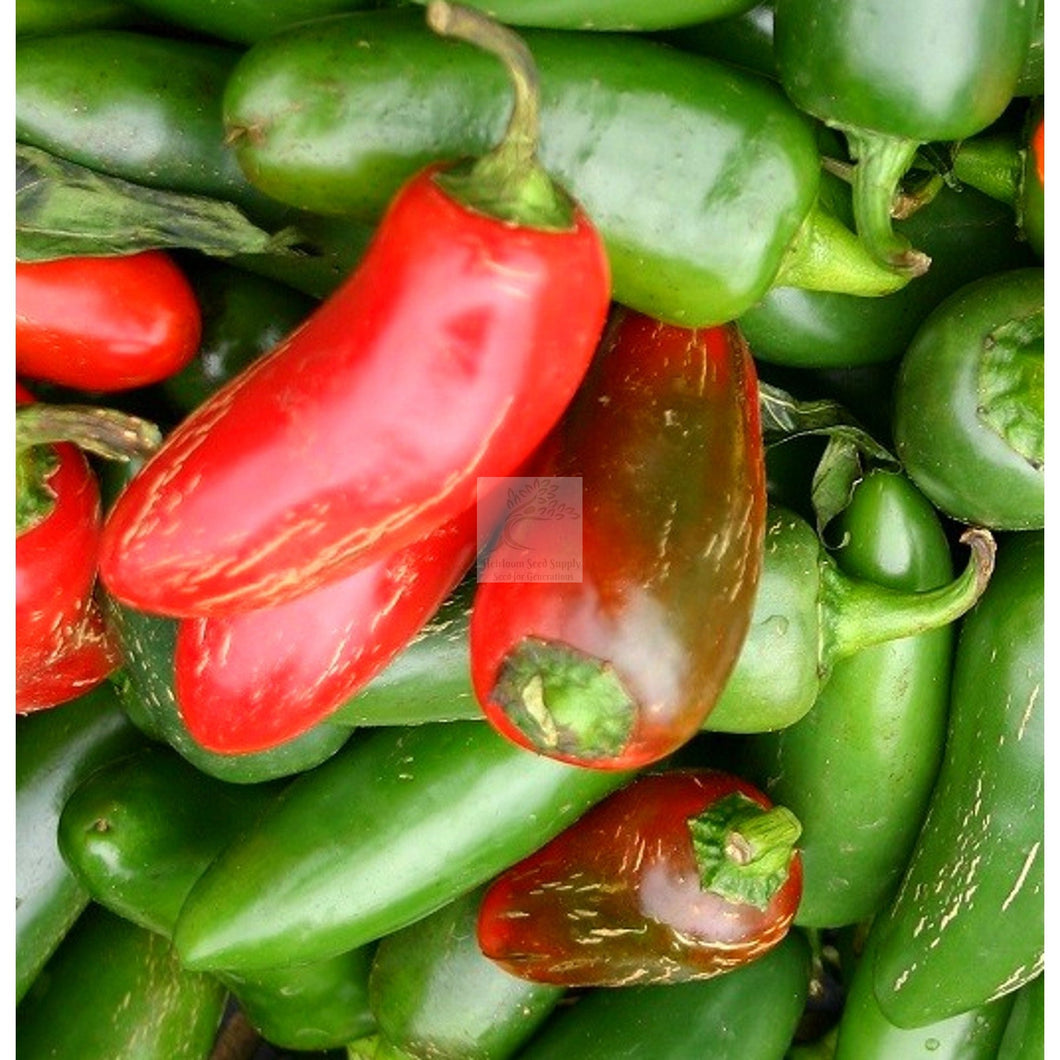 Early Jalapeno Hot Pepper Seed-Hot Pepper Seed-Heirloom Seed Supply