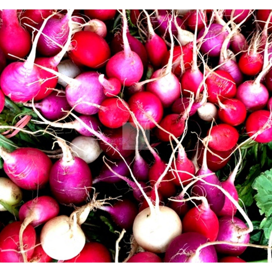 Easter Egg Summer Radish Seed Mix-Radish Seed-Heirloom Seed Supply