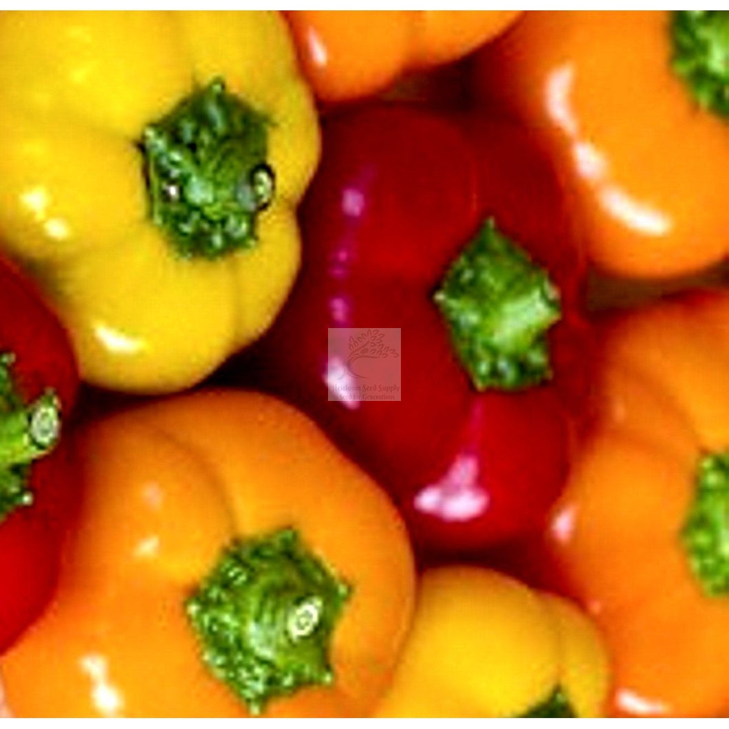 Klari Baby Cheese Sweet Pepper Seed Organic-Sweet Peppers-Heirloom Seed Supply