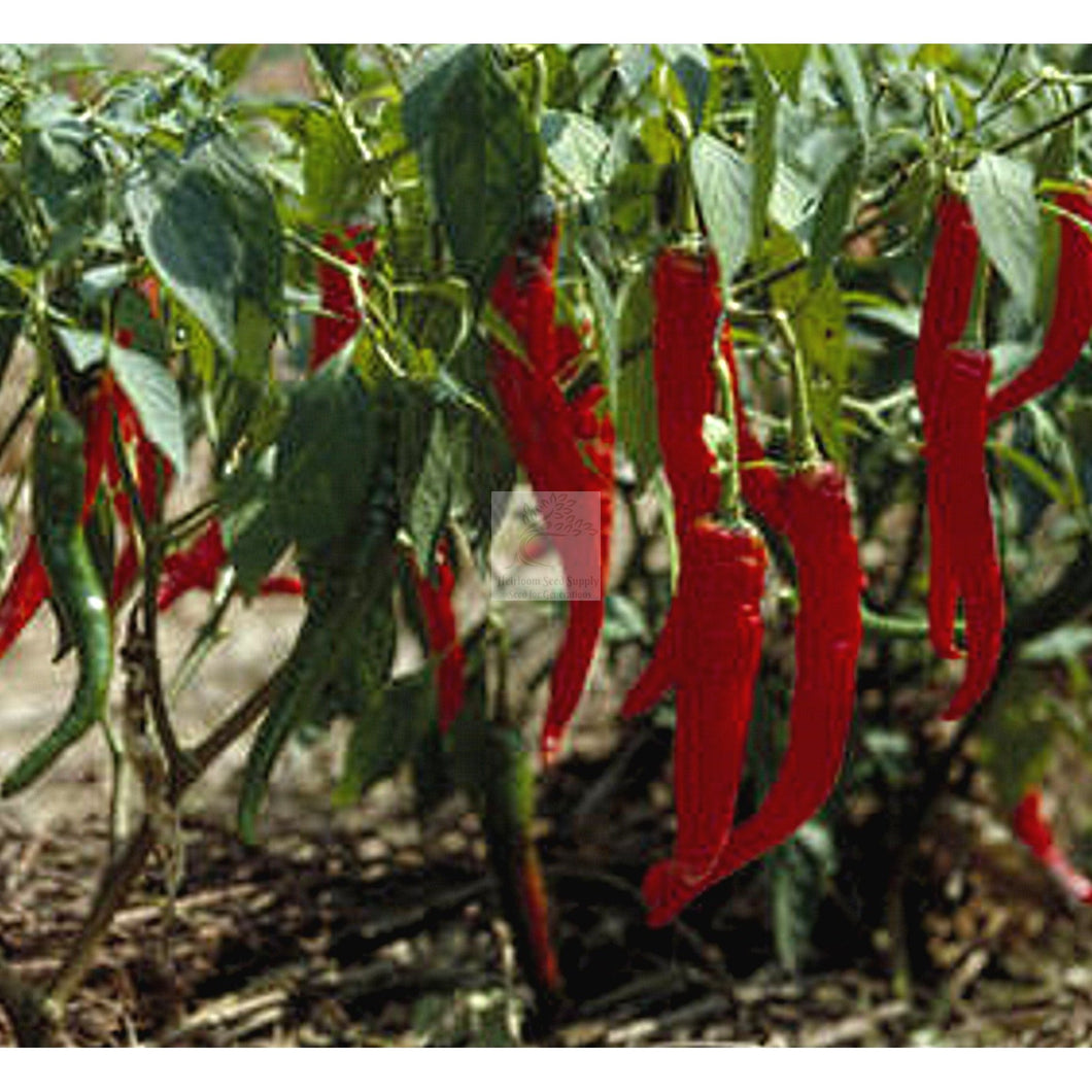 Long Red Cayenne Hot Pepper Seed-Hot Pepper Seed-Heirloom Seed Supply