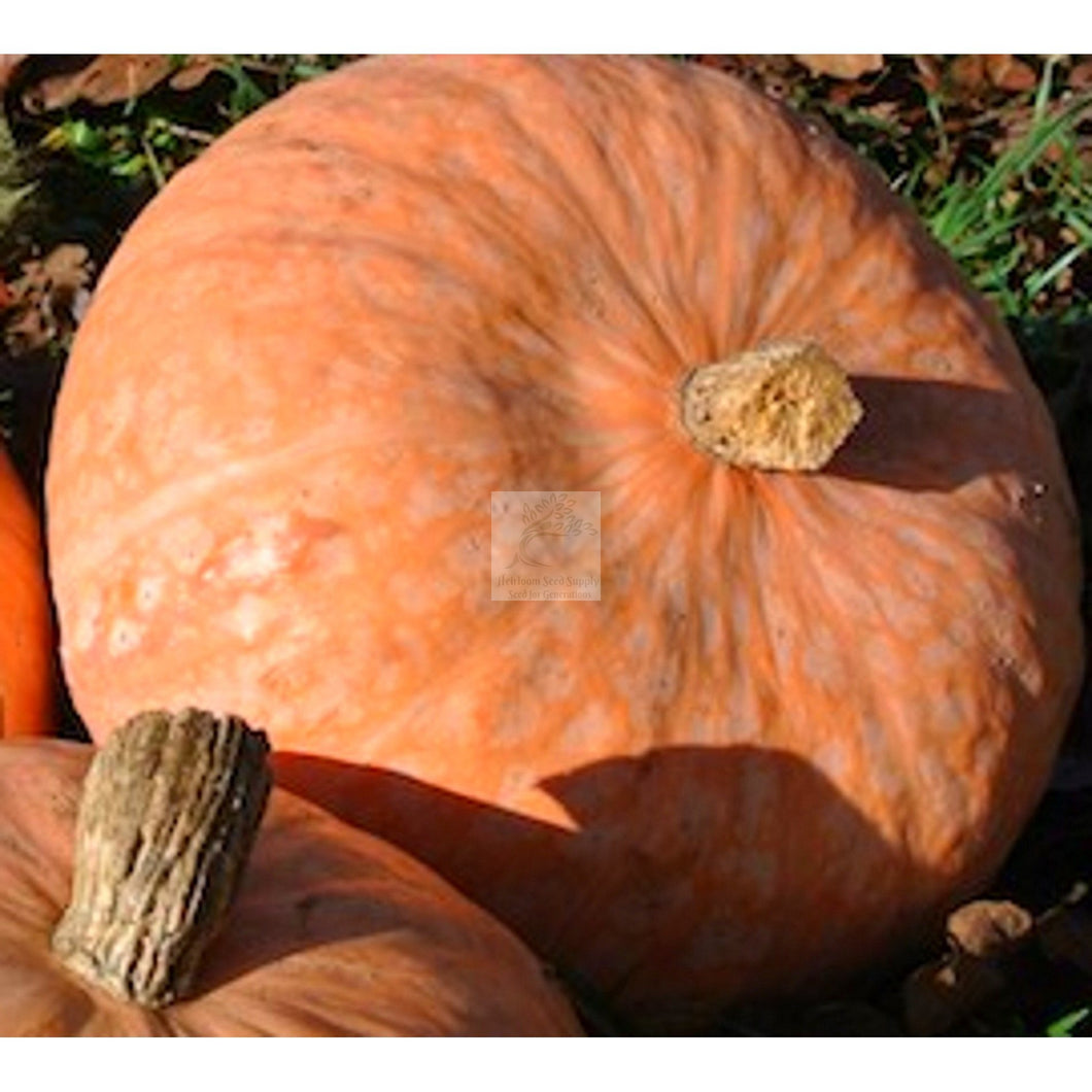 Lower Salmon River Winter Specialty Squash Seed-Squash-Heirloom Seed Supply