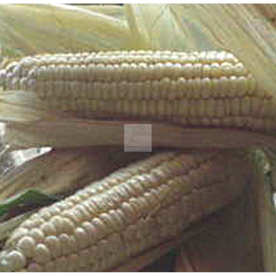 Luther Hill White Sweet Corn Seed Organic-Sweet Corn Seed-Heirloom Seed Supply