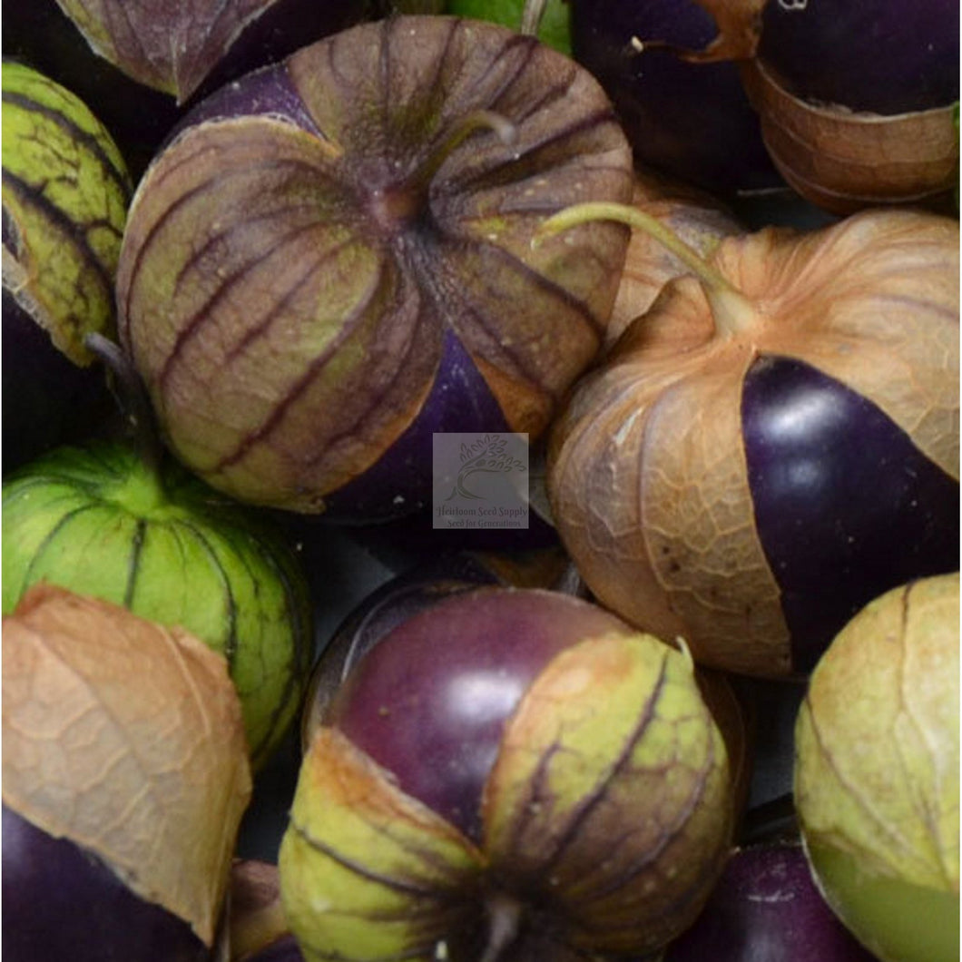 Purple Blush Tomatillo Seed Certified Organic-Tomatillo Seed-Heirloom Seed Supply