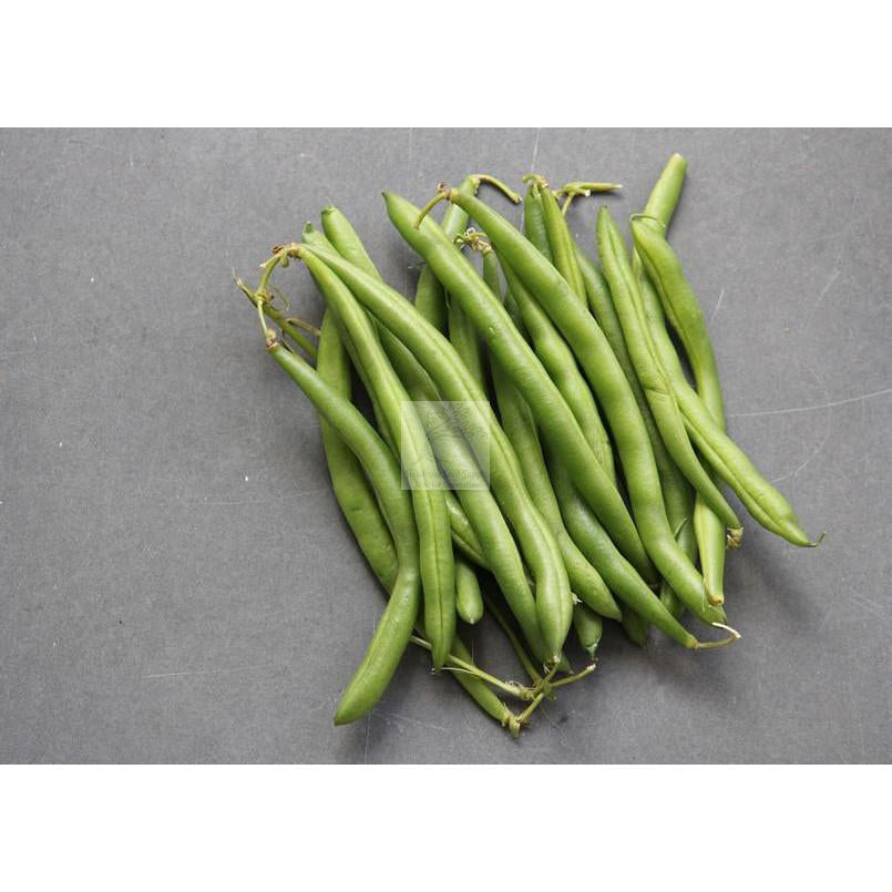 Provider Bush Green Bean Seed - great for early or Northern cool soils.-Beans-Heirloom Seed Supply