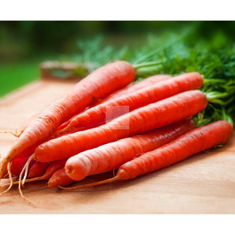 Scarlet Keeper Carrot Seed Organic