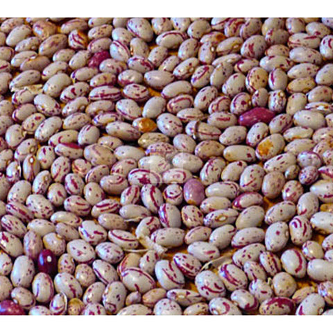 Taylor Dwarf Horticultural Shell Bean Seed