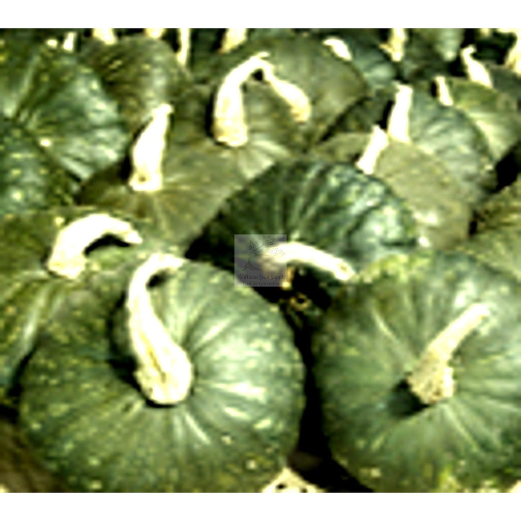 Uncle Davids Dakota Dessert Buttercup Winter Squash Seed-Squash-Heirloom Seed Supply