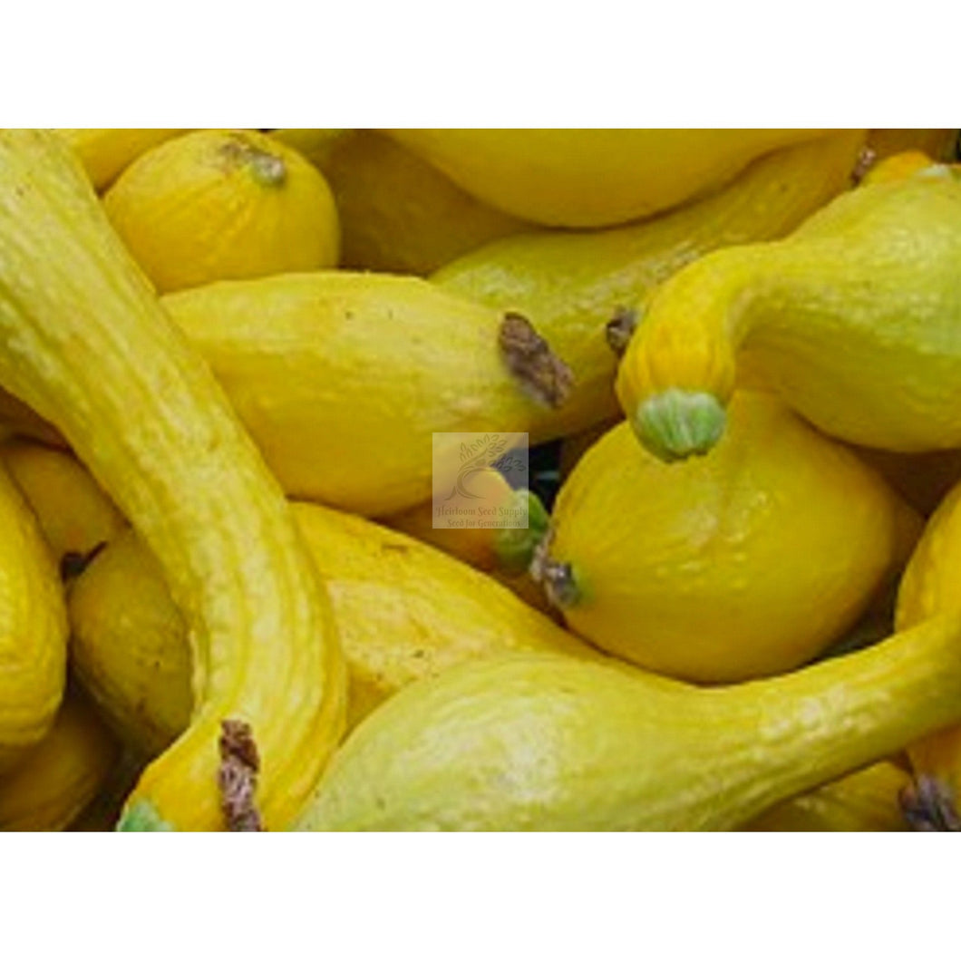Early Summer Yellow Crookneck Squash Seed-Squash-Heirloom Seed Supply
