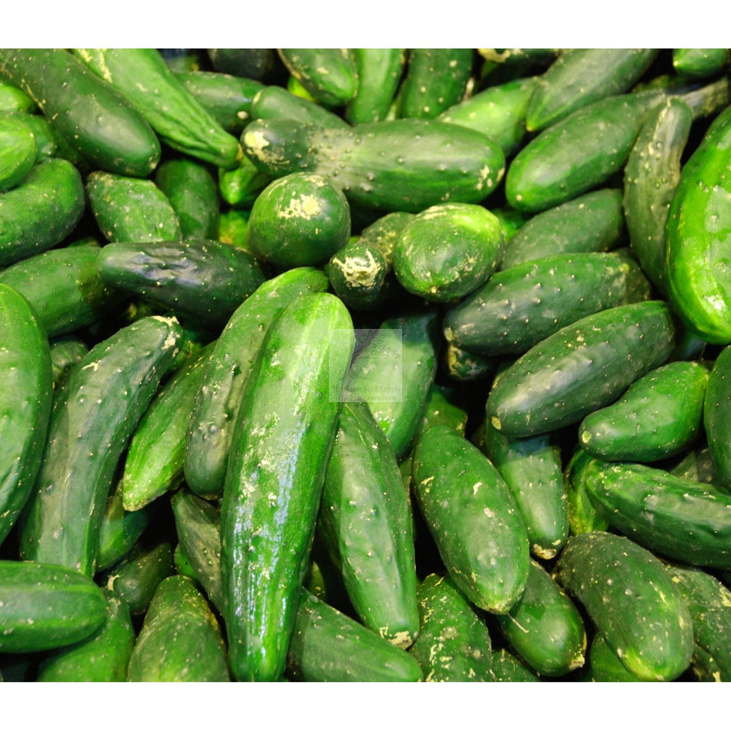 National Pickling Cucumber Seed-Cucumber-Heirloom Seed Supply