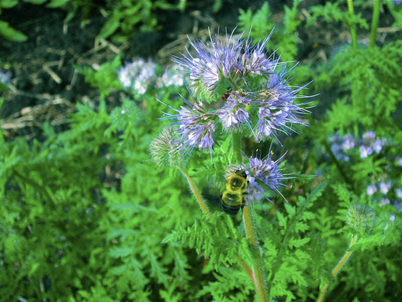 Providing a 'Benefit Package' for our Pollinators: Bee Bennies!