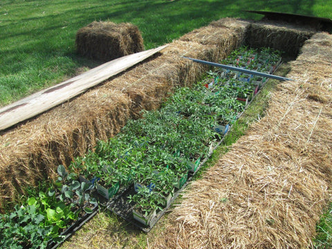 Temporary cold frame for hardening off transplants at Prairie Road Organic Seed