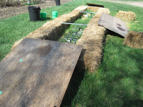 Temporary cold frame with plywood covers for hardening off transplants at Prairie Road Organic Seed