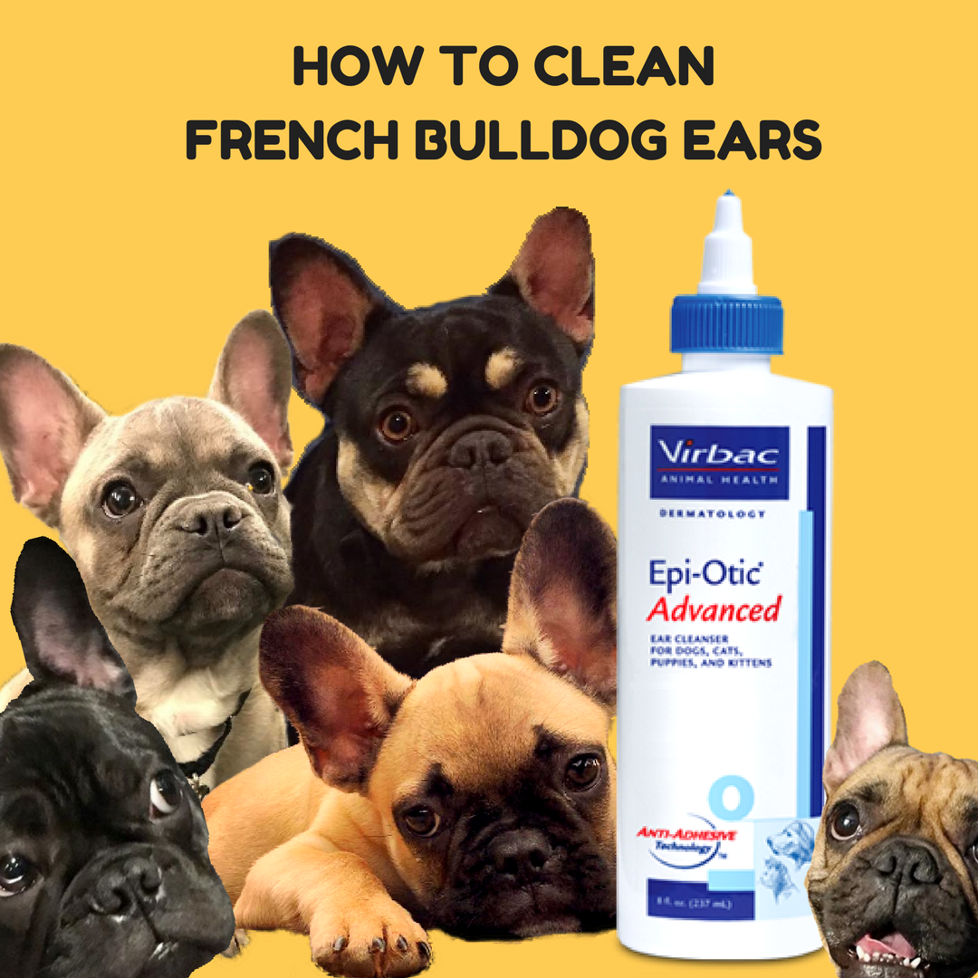 How To Clean French Bulldog Ears | Best Tips For Cleaning Dog Ears