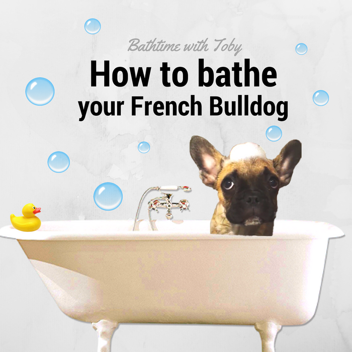 How Often Should I Bathe My French Bulldog Puppy?