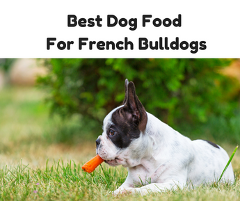 best food for french bulldog best dog food for french bulldogs 6623