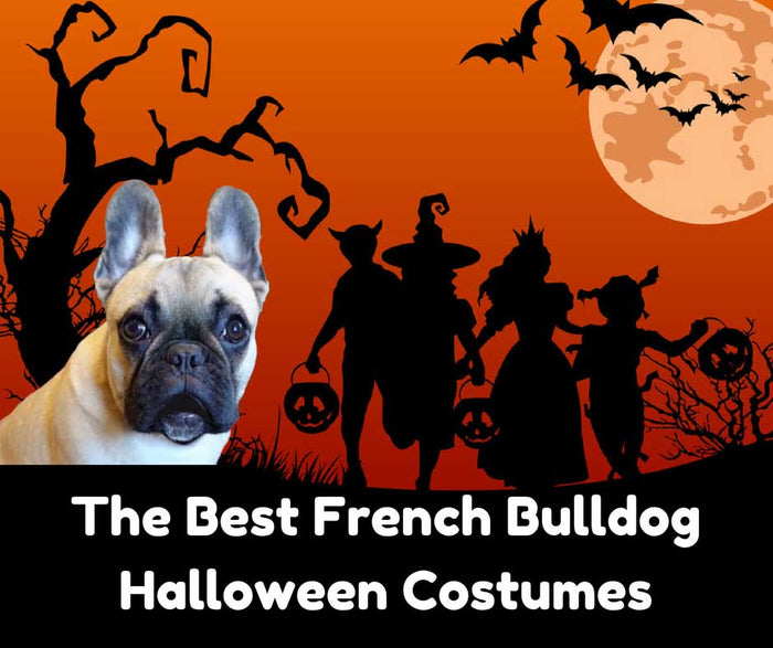 The Best French Bulldog Halloween Costumes