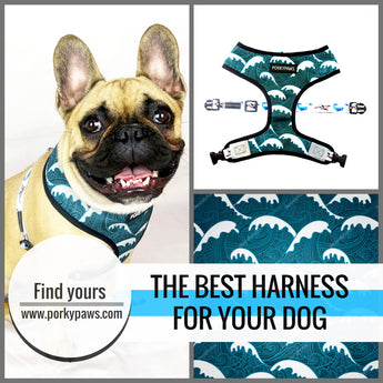 The Top 5 Best Harnesses For Your Dog
