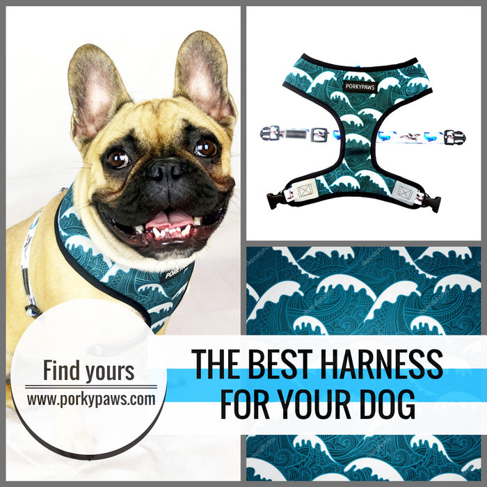 The Best Small Dog Harnesses
