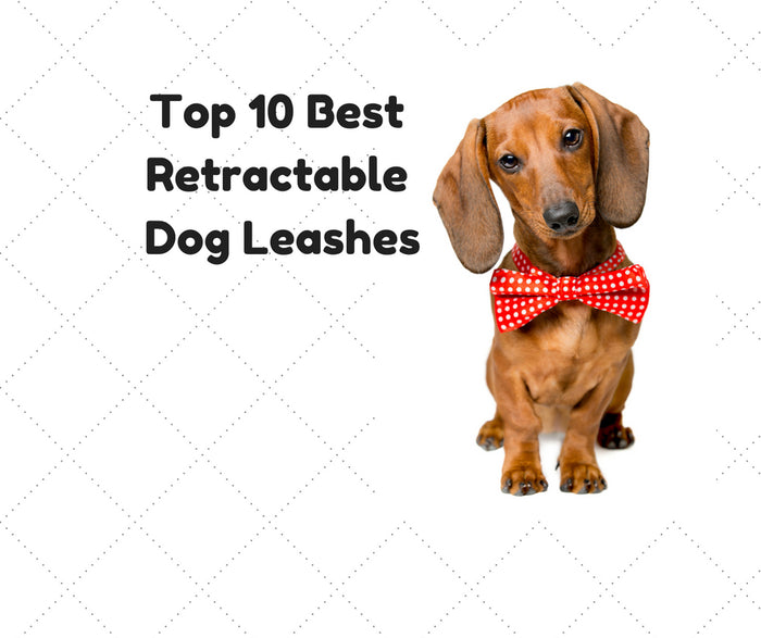 Top 10 Best Retractable Dog Leash