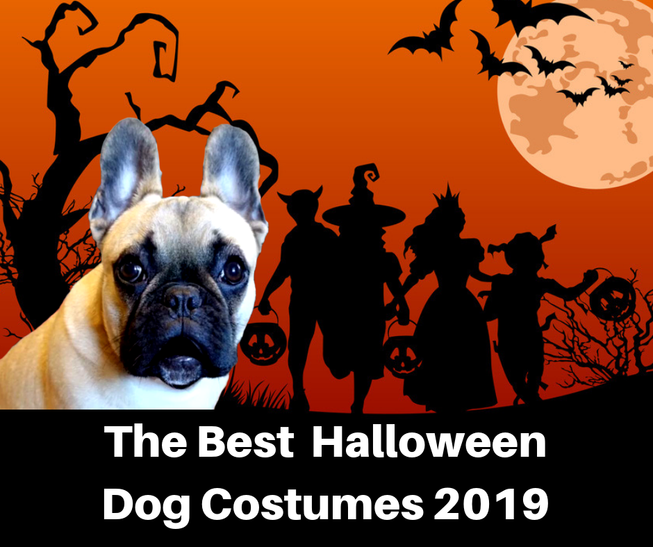 Best Dog Costumes 2019