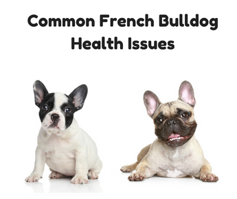 Common French Bulldog Health Issues