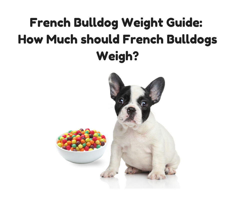 French Bulldog Weight Guide (How Much Should French Bulldogs Weigh?)