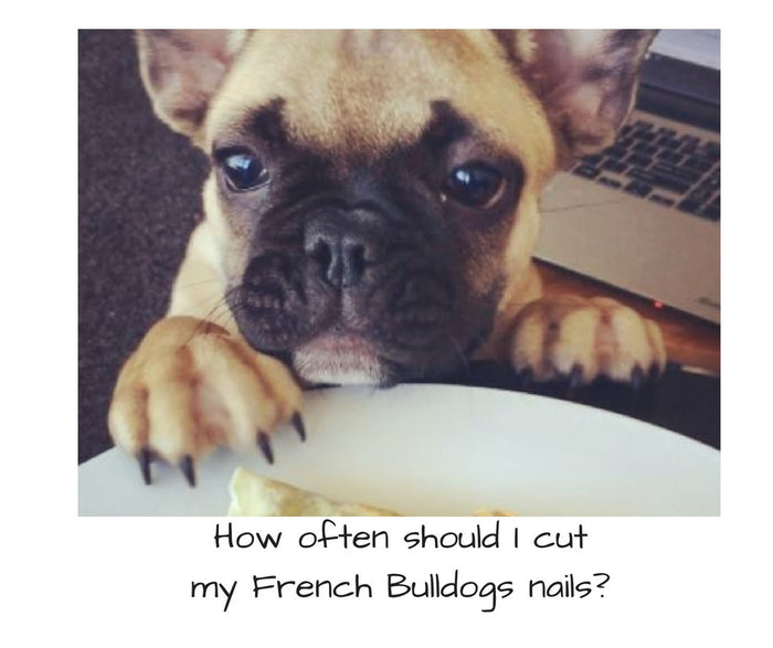 How often should I cut my French Bulldog's nails?