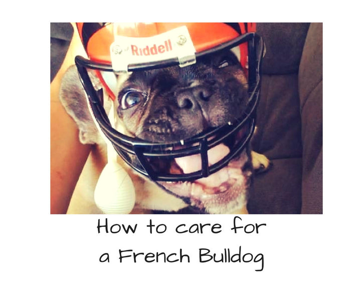 How to Care For Your French Bulldog Puppy