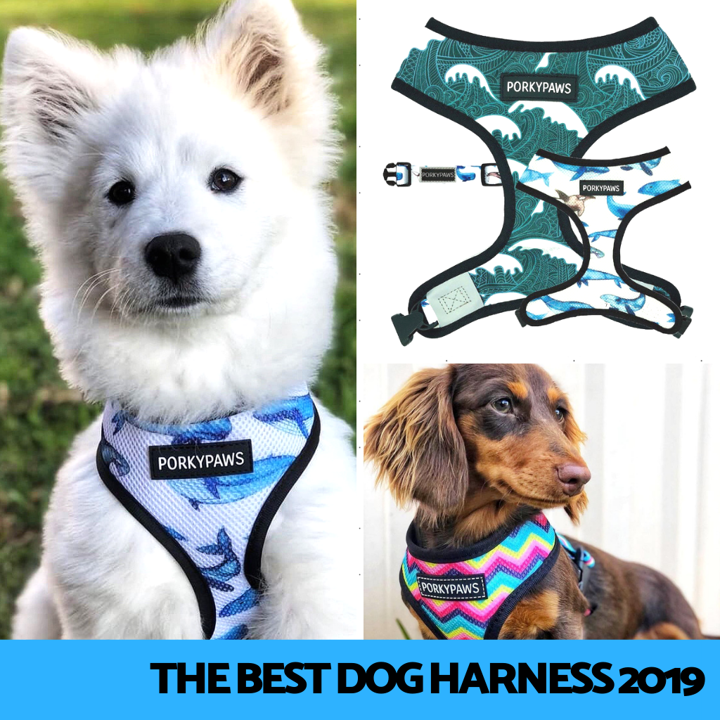 Best Dog Harness 2019
