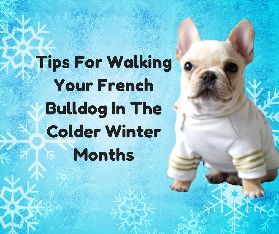 Tips For Walking Your French Bulldog In The Colder Winter Months