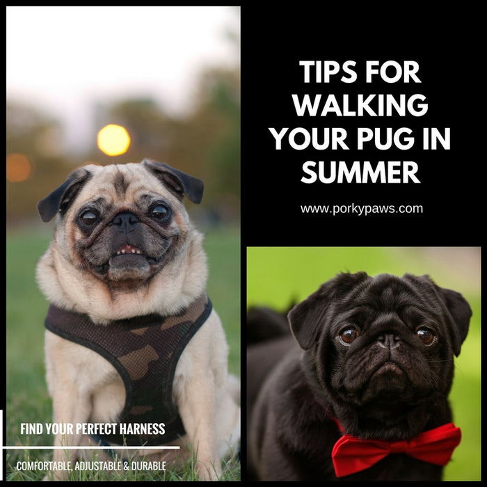 Tips for Walking Your Pug in Summer