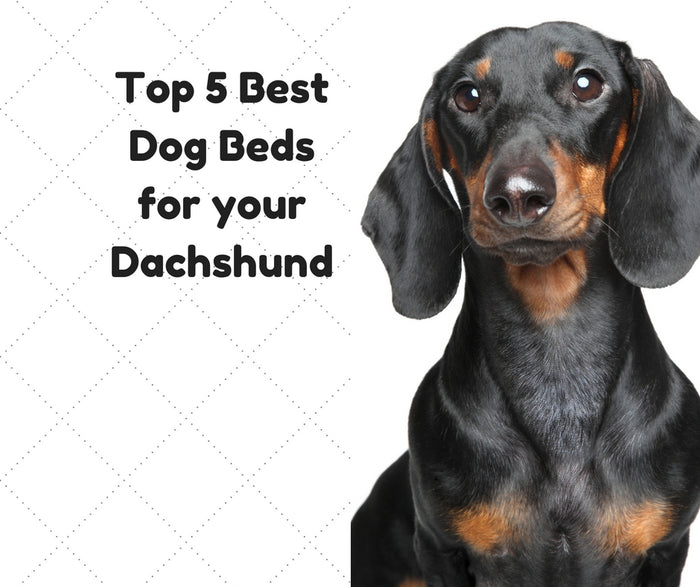 Top 5 Best Dachshund Dog Beds