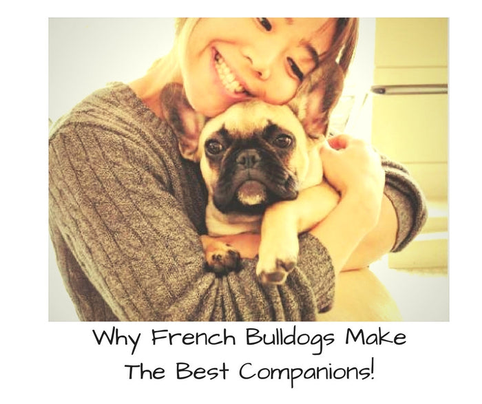 Why French Bulldogs Make The Best Friends!